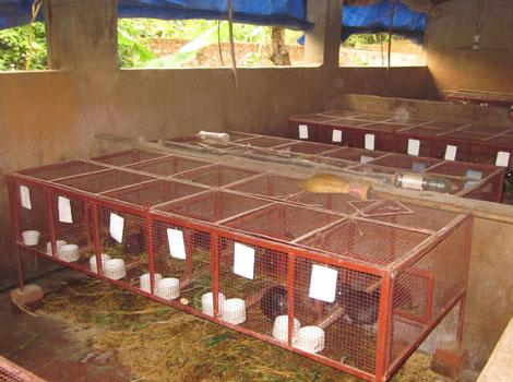 Nông dân có nên nuôi chồn nhung đen ?