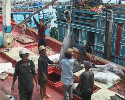 Vào mùa đánh bắt cá Ngừ đại dương