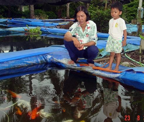 Khó khăn và giải pháp cho nghề nuôi cá cảnh